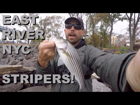 EAST RIVER NYC STRIPERS!