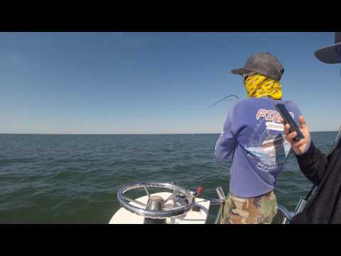 Virginia Red Drum Fishing
