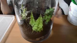 Tank Tutorial- Woodland Biome Terrarium