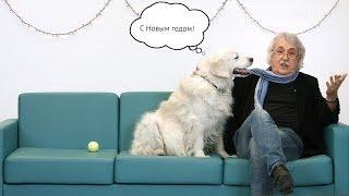 Новый год по-научному. Эволюция собак