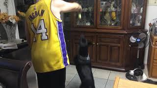 A funny dog vs a funny client