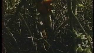 村上弘明シリーズの第一弾です。 「自然は 馬鹿力 がある。」