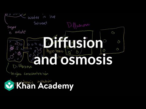 Diffusion and osmosis  Membranes and transport  Biology  Khan Academy