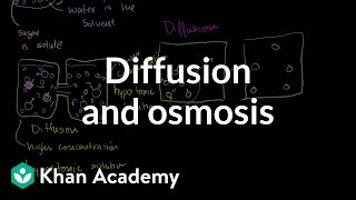Repeat youtube video Diffusion and osmosis | Membranes and transport | Biology | Khan Academy