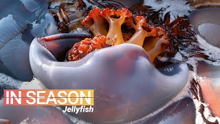 How Jellyfish is Eaten in China - In Season (S1E5)
