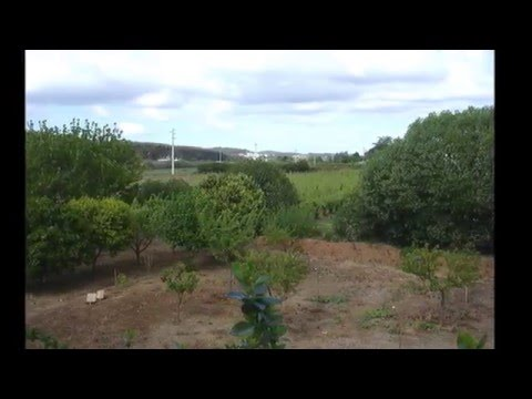 Farm for sell in Torres Vedras, Lisbon, Portugal