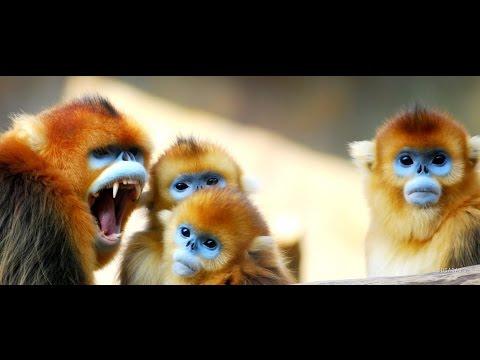 Вопрос: Все ли виды обезьян едят бананы?