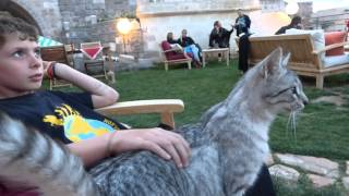 Cutest Grey Cat Best Family Vacation in Cappadocia Taskonaklar Cave Hotel Turkey