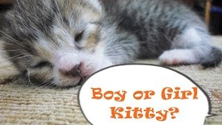 How to Tell if Your Kitten is a Boy or a Girl | CatDogCuties