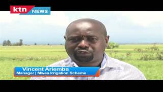 The Chamwada Report Episode 68: Impact of drought on rice farming in Mwea 6th November 2016