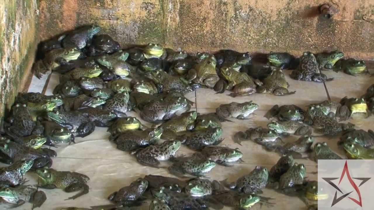 Wild Singapore Jurong Frog Farm YouTube