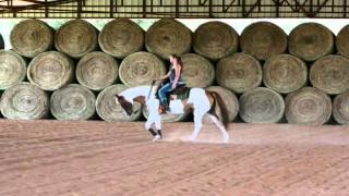 Scotch Bar Rose - Red Dun Tobiano Mare FOR SALE!