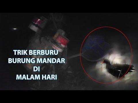 Wow Trik berburu burung mandar.dll di malam hari