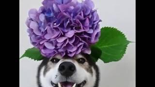 Top 200 tình huống hài hước khó đỡ của động vật