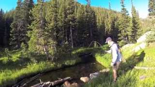 Greenback Cutthroat Trout Fly Fishing