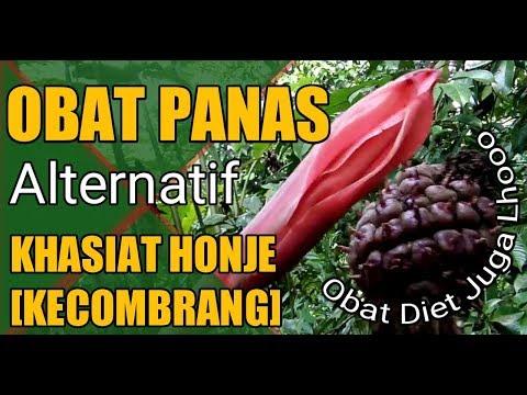 obat-panas-dalam-dari-buah-honje-(kecombrang)---obat-herbal-alternatif