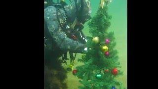 Подводная Ёлка 2015. Дайвинг в Крыму. Орджоникидзе