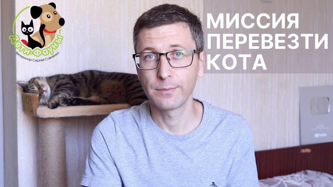 Как перевезти кошку (кота) с квартиры на квартиру? 7 рекомендаций