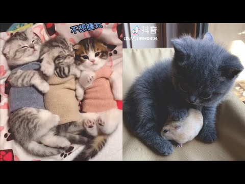 Kittens Cute and Funny Tik Tok Videos Compilation 2020 #1