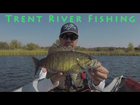 Trent River Bass, Northern Pike, Yellow Perch, Catfish Fishing (2019)