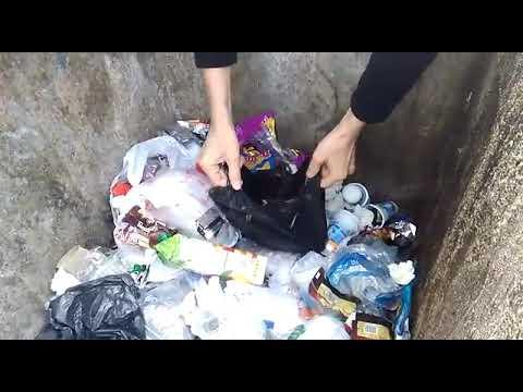 3 Yavru kediyi çöpe atarak ölüme terk ettiler 1