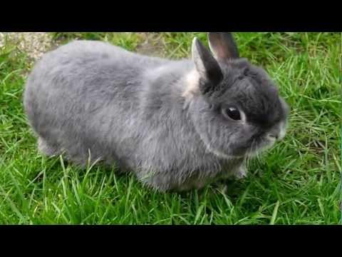 My Rabbit THUMPER
