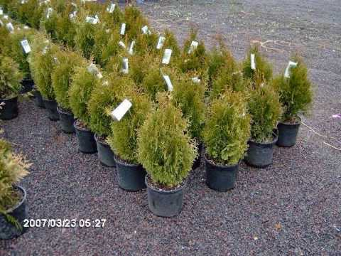 XXX Trees for a changing climate