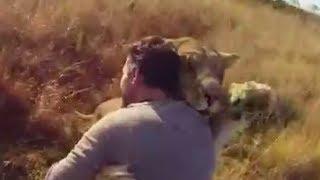 немыслимое отношение человека и льва в дикой природе