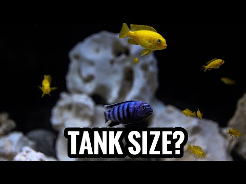 African Cichlids  in Medium Sized Tanks