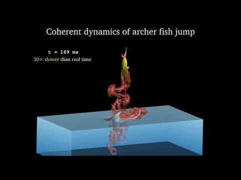 A Fish Out Of Water: The Archer Fish's Rocket-like Launch