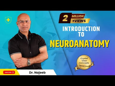 Introduction To Neuroanatomy - Neurophysiology