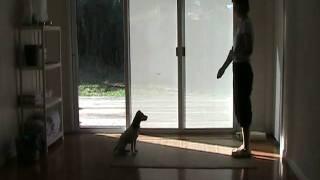 Dog Training, Positive Reinforcment, Treat Rewards, Non-reward Marker, Directive Cues Session Ii