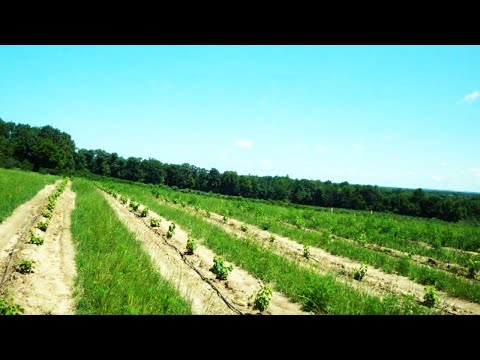 Introduction - Grape Video Series on Viticultural Information