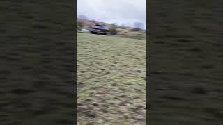 English springer spaniel and springador running around the field.
