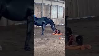 Лошадка взбесилась Приколы до слёз Смех Смешно Животные Приколы Смешные видео Is the horse mad