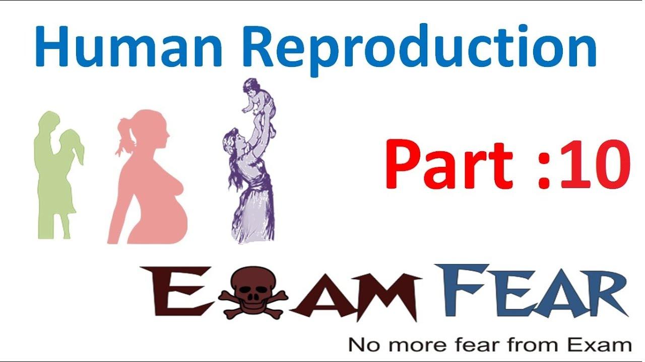 Fear Of Sperm
