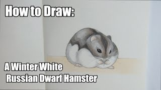 How to draw a Winter White Russian Dwarf HAMSTER   Drawing Tutorial