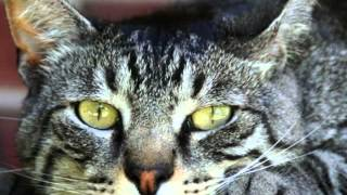 Очень красивые коты!!!
