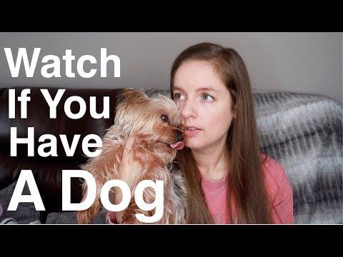 Is Your Dog Sick? Grain Free & DCM In Dogs | Truth & Facts