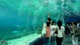 Manila Ocean Park - Buhay na Karagatan