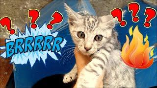 Cute Kitten Caught Cold. IS IT  OKAY NOW? (Cute kittens- cat food)