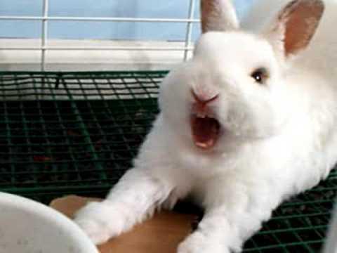 Kijk dit konijn eens angstaanjagend zijn