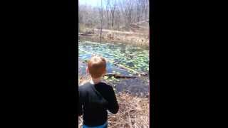 #ParkerJaxWard finds 12 rare spotted turtles along Towpath Trail in Metro Park 3.11.14