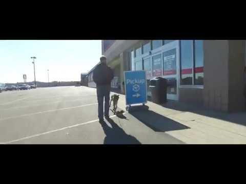 Best Dog Training in Columbus, Ohio! 1 Year Old Weimaraner, Lou!