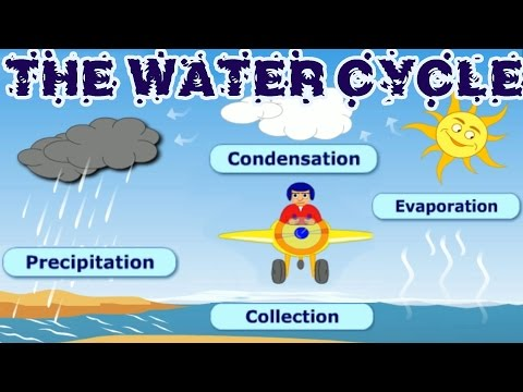 The Water Cycle: Collection, Condensation, Precipitation, Evaporation, Learning Videos For Children