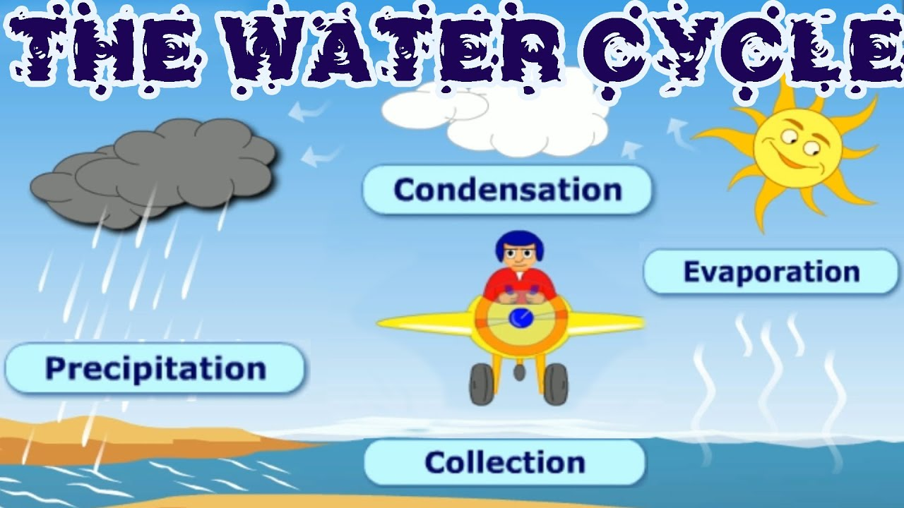 The water cycle collection condensation precipitation evaporation learning videos for children youtube also rh