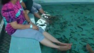Manila Ocean Park-2016