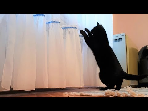 Cat vs. Curtains