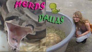 herps dallas reptile show