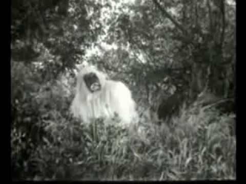 Global Bigfoot Phenomena   Doovi